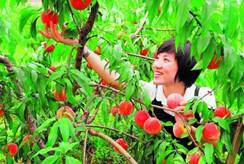 农业产业品牌策划探索