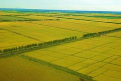 为中原经济区农业产业化发展提几点建议