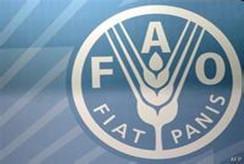 世界粮农组织 粮食安全需全球共同关注